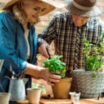 Senior man and woman planting two plants in pots
